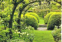 Garden: Espalier