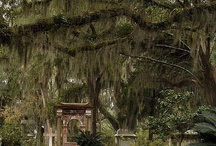 Cemeteries of the South / Sharing the beauty and history of cemeteries of the Southern United States