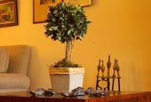 Arreglos de Flores Secas / Decoración de Interiores con Flores secas. Productos Premium. Topiaries y Pomanders.