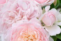 roseglede