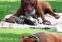 Hounds / All breeds..