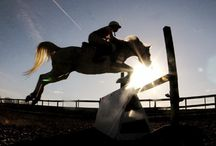 Equestrian / by Kate O'Neill