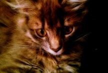 Cat's, my cats