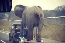 elephants & landy