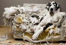 Oh my dog ! / by Sandrine ...