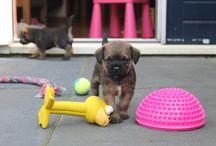 Puppy love / Wibauts siblingd