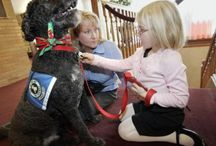 Grief Therapy Dog