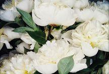 FLORA & FAUNA / Flowers Arrangements worth noting.