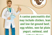 Pancreatitis Dog