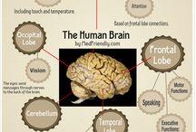 Infographics / Medical/Health Infographics