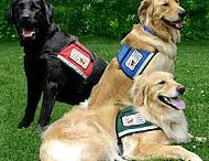 Therapy Dogs and Training