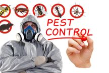 Pest Control Services in Gurgaon / If you are looking for pest control survives in Gurgaon than Mourier offers trusted pest control service in Delhi NCR. Mourier pest control services in Gurgaon to wipe off these animals with immediate effect. Get your tranquility with our magnificent services.
