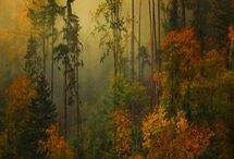 Autumn/Fall / by Theresa J