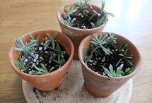 Plantas nuevas