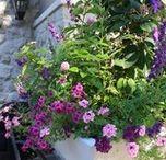 Seasonal Planters: Creative Design / Seasonal planters, created by the Enviroscape Inc. team.