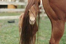 #HorseMom