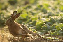 Lebres e coelhos