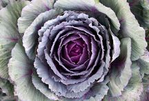 FABULOUS FLOWERS / by Norma Heller