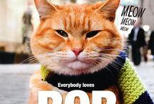 Bob, the streetcat / Einfach Bob