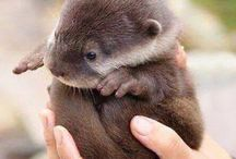 Otters and Ferrets