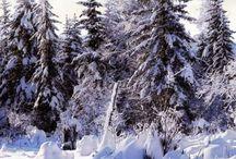 Vinter / Sne
