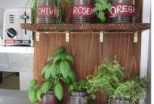 Growing Herbs/Herbal Medicine