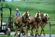 001.   A09.   Amish people