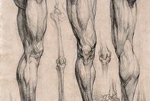 Anatomi drawing