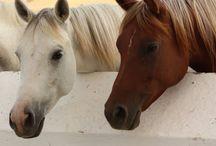 Horse please