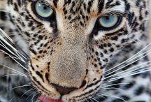 Animals / Cute