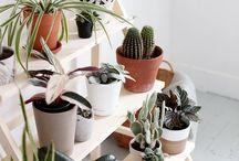 50 ideias para plantas de casa