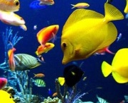 Colourful fish,jellyfish