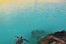 My Dream- the Ocean