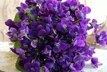 képek virágok