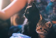 Kittehs / by Stacy Bourns