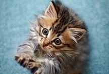 pekne / Cats