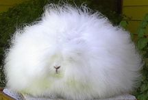 Angora Bunnies and Other Fuzzy Delights / by Rebecca Raney