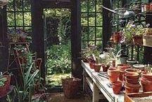 Potting sheds/Green houses / by Helen Mathias