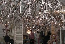 akar pohon lampu