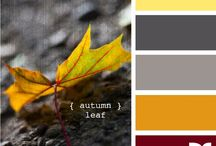 Color combos / Home / by Melinda Lowrey