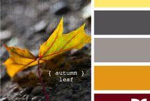 Color & Combinations