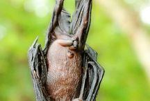 4) Bats, spiders, frogs etc.