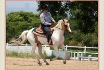 Ridning/Heste
