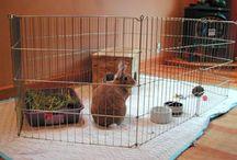 Rabbit / by April Bauknight