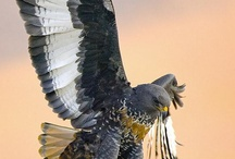 Ref. Pássaros