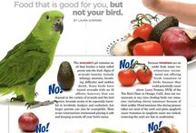 Animals: Lovebirds Bad Food