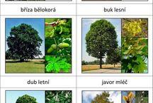 stromy a kríky