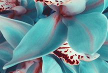 Flowers / by Lívia Lamblet