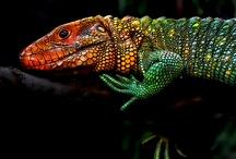 reptile abcs