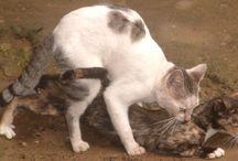 Zachowanie rozrodcze kotów